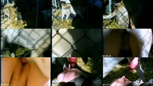 0486 DgSx Pleasure In The Pen m - Pleasure In The Pen - Dog Bestiality Video