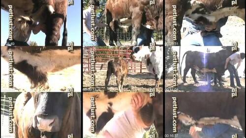 1326 ZS Petlust   Bull Boys m - Petlust - Bull Boys