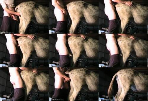 0438 ZooGay Dnky Cum Outside 9.16.05 m - Dnky Cum Outside 9.16.05 - Male Bestiality Porn