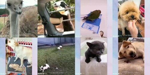 0106 FUN Funniest Animals   Cute Baby Animals Videos Compilation 9 m - Funniest Animals - Cute Baby Animals Videos Compilation 9