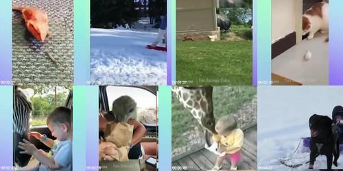0103 FUN Funniest Animals   Cute Baby Animals Videos Compilation 8 m - Funniest Animals - Cute Baby Animals Videos Compilation 8
