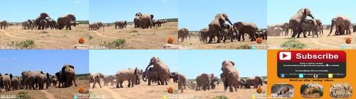 0123 FUN Mating Elephants m - Mating Elephants