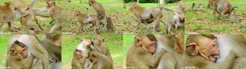 0117 FUN Monkey Block Milk To A Baby But Monkey Man Wanna Sex m - Monkey Block Milk To A Baby But Monkey Man Wanna Sex