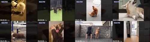 0130 FUN Funny Dog Videos   Tiktok Dogs Doing Funny Things Compilation m - Funny Dog Videos - Tiktok Dogs Doing Funny Things Compilation