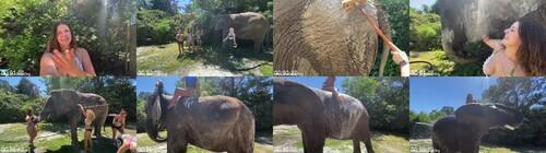0132 FUN Ladies Wash A 9000lb Elephant  m - Ladies Wash A 9,000lb Elephant !