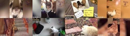 0028 FUN Cats Going Crazy   Funniest Catnip Reactions And Much More m - Cats Going Crazy! - Funniest Catnip Reactions And Much More