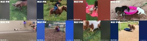 0037 FUN Cute And Funny Baby Pony Horses Compilation   Cutest Baby Animal Videos m - Cute And Funny Baby Pony Horses Compilation - Cutest Baby Animal Videos