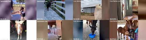 0040 FUN Cute And Funny Horse Videos Compilation m - Cute And Funny Horse Videos Compilation