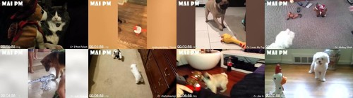 0064 FUN Dogs And Cats Reaction To Toy 2020   Funny Dog And Cats Reaction Compilation m - Dogs And Cats Reaction To Toy 2020 - Funny Dog And Cat's Reaction Compilation