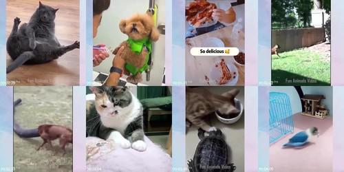 0088 FUN Funniest Animals   Cute Baby Animals Videos Compilation 11 m - Funniest Animals - Cute Baby Animals Videos Compilation 11