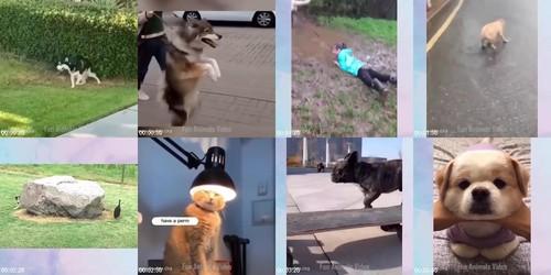 0091 FUN Funniest Animals   Cute Baby Animals Videos Compilation 12 m - Funniest Animals - Cute Baby Animals Videos Compilation 12