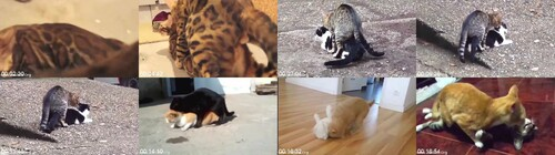 0096 FUN Partcats Mating Hard And Fast Up Close Funny Animals Mating Compilation m - Partcats Mating Hard And Fast Up Close Funny Animals Mating Compilation