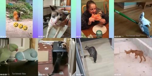 0100 FUN Funniest Animals   Cute Baby Animals Videos Compilation 7 m - Funniest Animals - Cute Baby Animals Videos Compilation 7