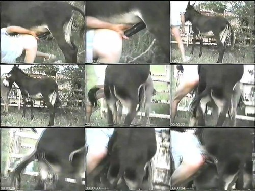 370 Donkey Sex m - Donkey Sex - Vintage Bestiality Porn