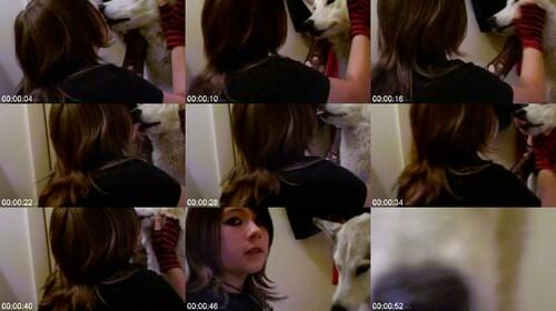 0604 DgSx Kissing Dog m - Kissing Dog / DogSex Video