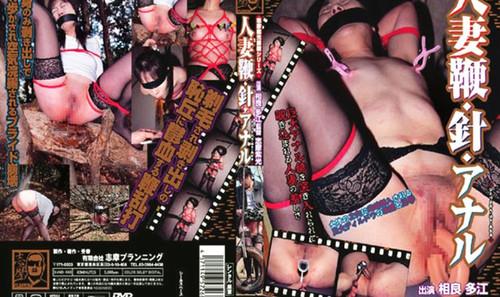 Shima-151_m.jpg