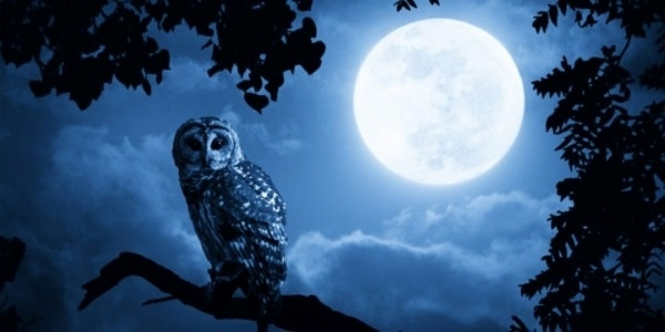 BlueMoon-Owl,